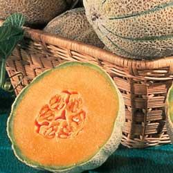 melon-parfum-bougie-e
