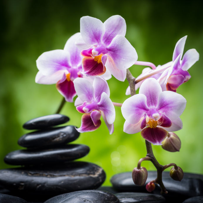 32957783 – zen basalt stones and orchid