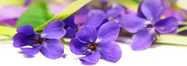 violette-fleur-parfum-bougie-cosmetique